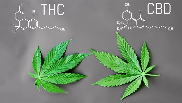 Эффективность медицинской марихуаны: миф или правда?